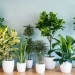 Indoor Plants List
