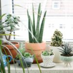 Indoor Plants for Home Office