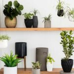 Indoor Plants Air Purifer