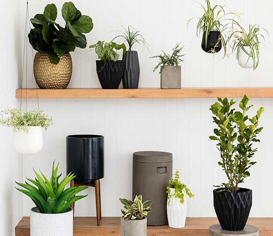 Air Purifying Plants For Bathroom: Plants That Clean The Air Of The House