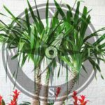 Plants and Tree Vastu