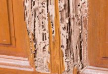 Getting rid from Termites