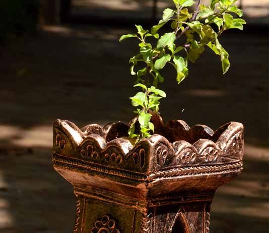 Location Of Tulsi Plant As Per Vastu Benefits And
