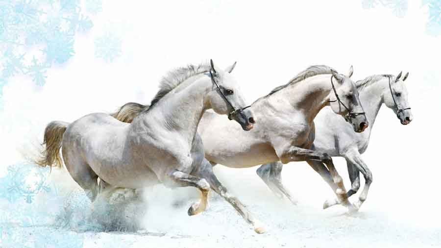 Is Everything We Know Wrong >> Vastu Shastra for Running Horse Painting - DecorChamp