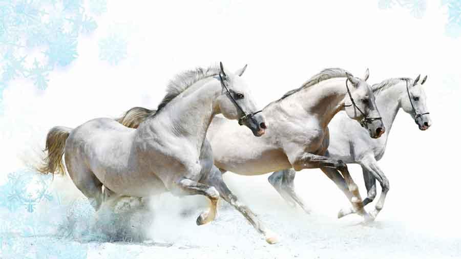 7 horse let the 7horse run