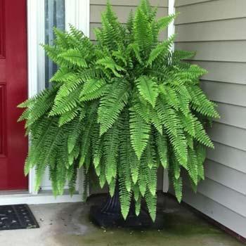 Air Purifying Indoor Plants 6 Best Indoor Plants List