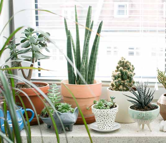 Air Purifying Plants For Bathroom: Air Purifying Indoor Plants