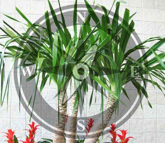Vastu Shastra For Trees And Plants Decorchamp