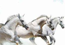 Vastu Shastra For Running Horse Painting