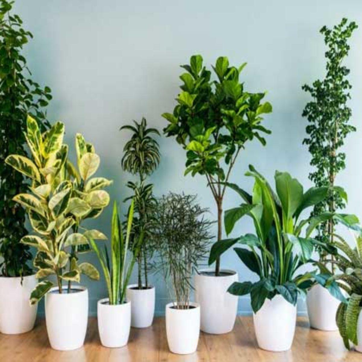 5 Plants That Should Not Be Kept Inside