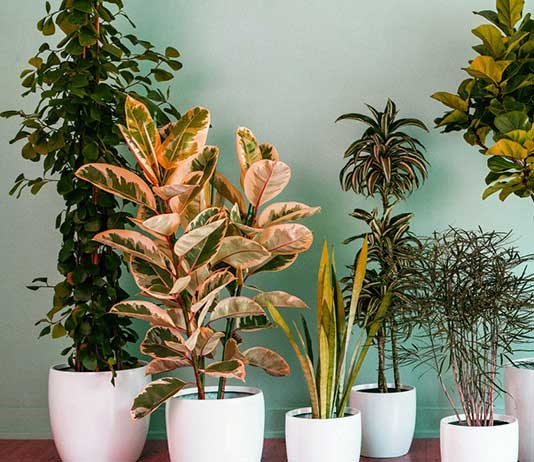Which Are The Plants That You Could Keep Inside Your House